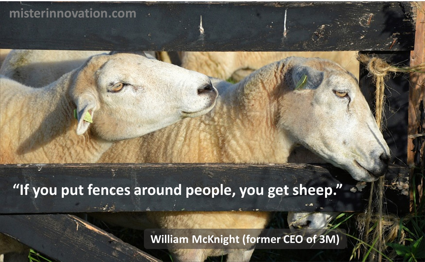 William McKnight of 3M Quote on Fences and Sheep